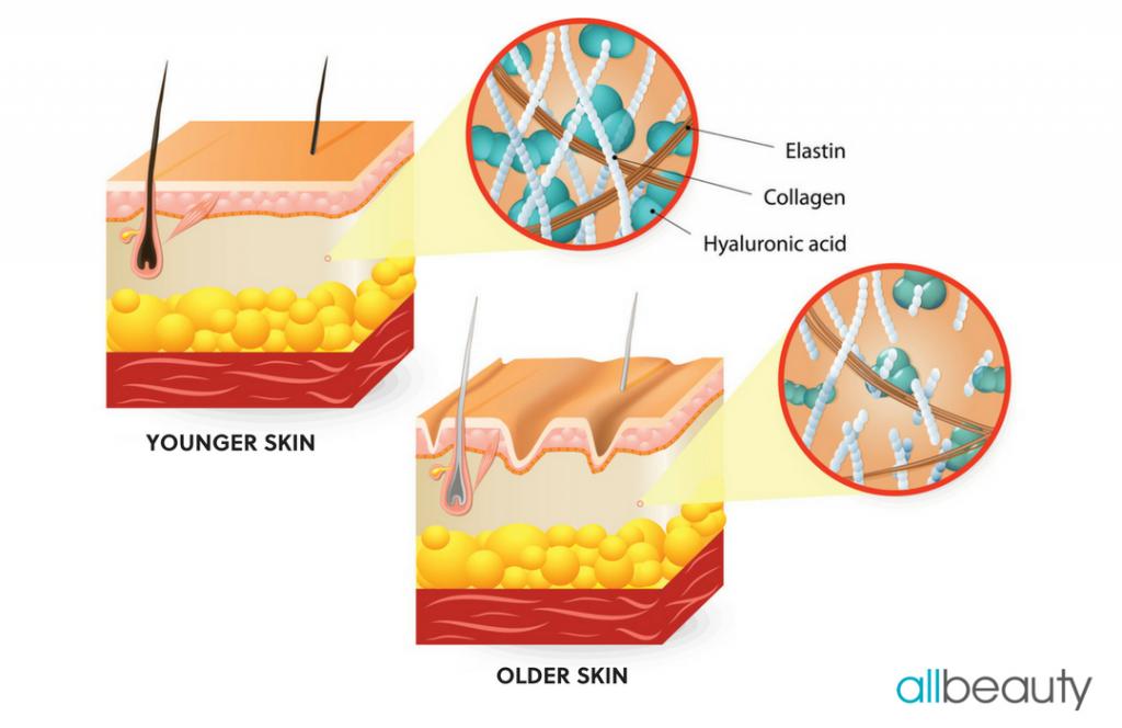 Hyaluronic Acid Info