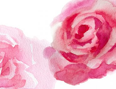 roses in beauty