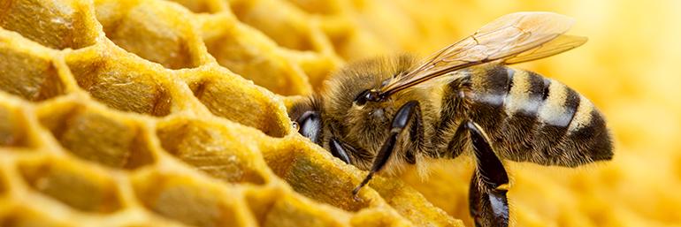 Bee - ingredients