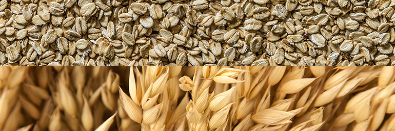 Avena Sativa - Ingredients